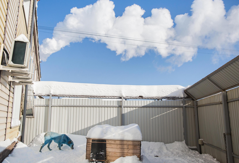 Immagine di un cane blu